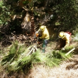 Cal Cons Corps removing palms stewart creek-Brian Stark